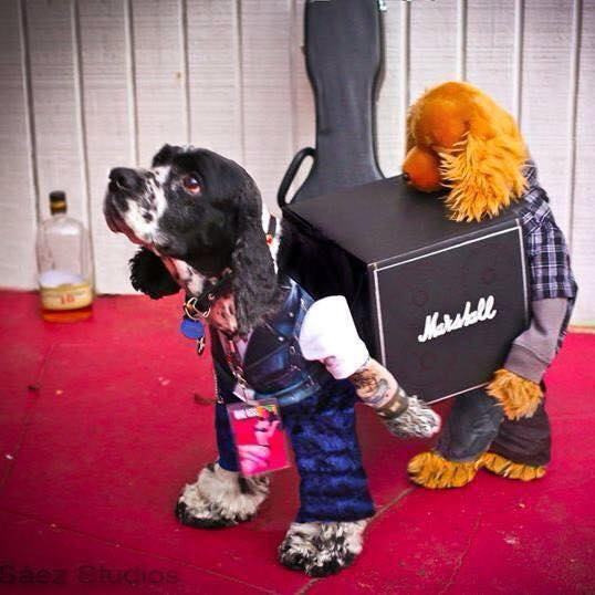 Dog-Roadie